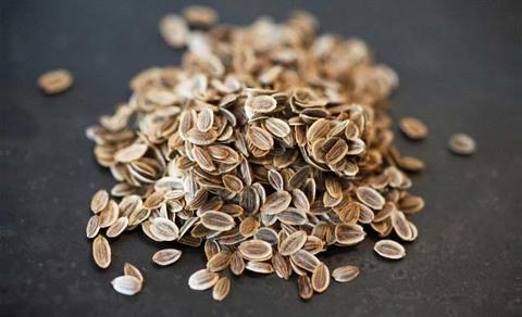Укроп семена крупные