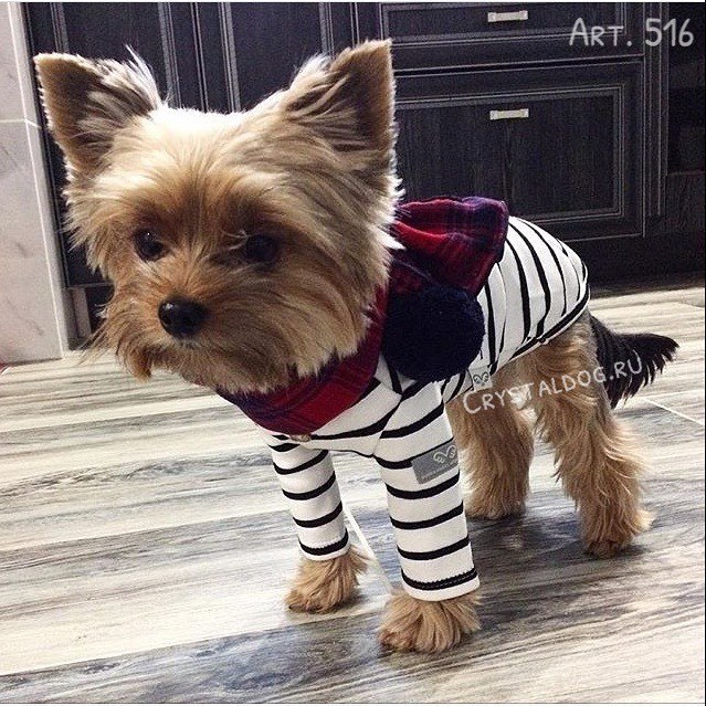 одежда для йорка puppyangel