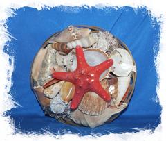 Набор морских ракушек с звездой