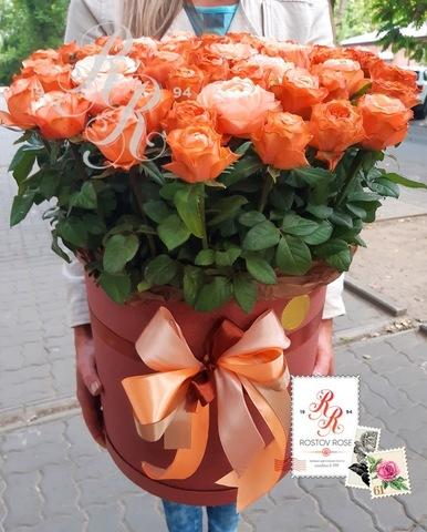 51 роза Кахала пионовидная в коробке
