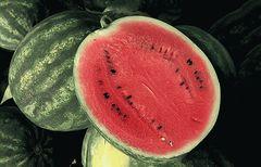 Соренто F1 семена арбуза, (Syng.)