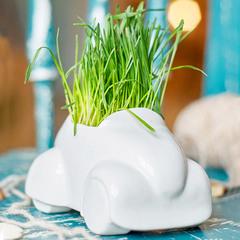 Набор для выращивания Eco Машина Экочеловеки