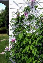Шпалера для вьющихся растений 78х188 см