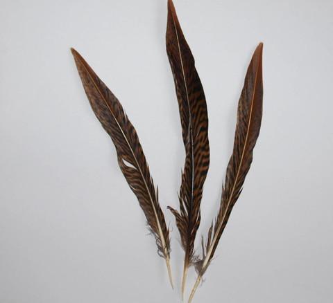 Перо золотого фазана