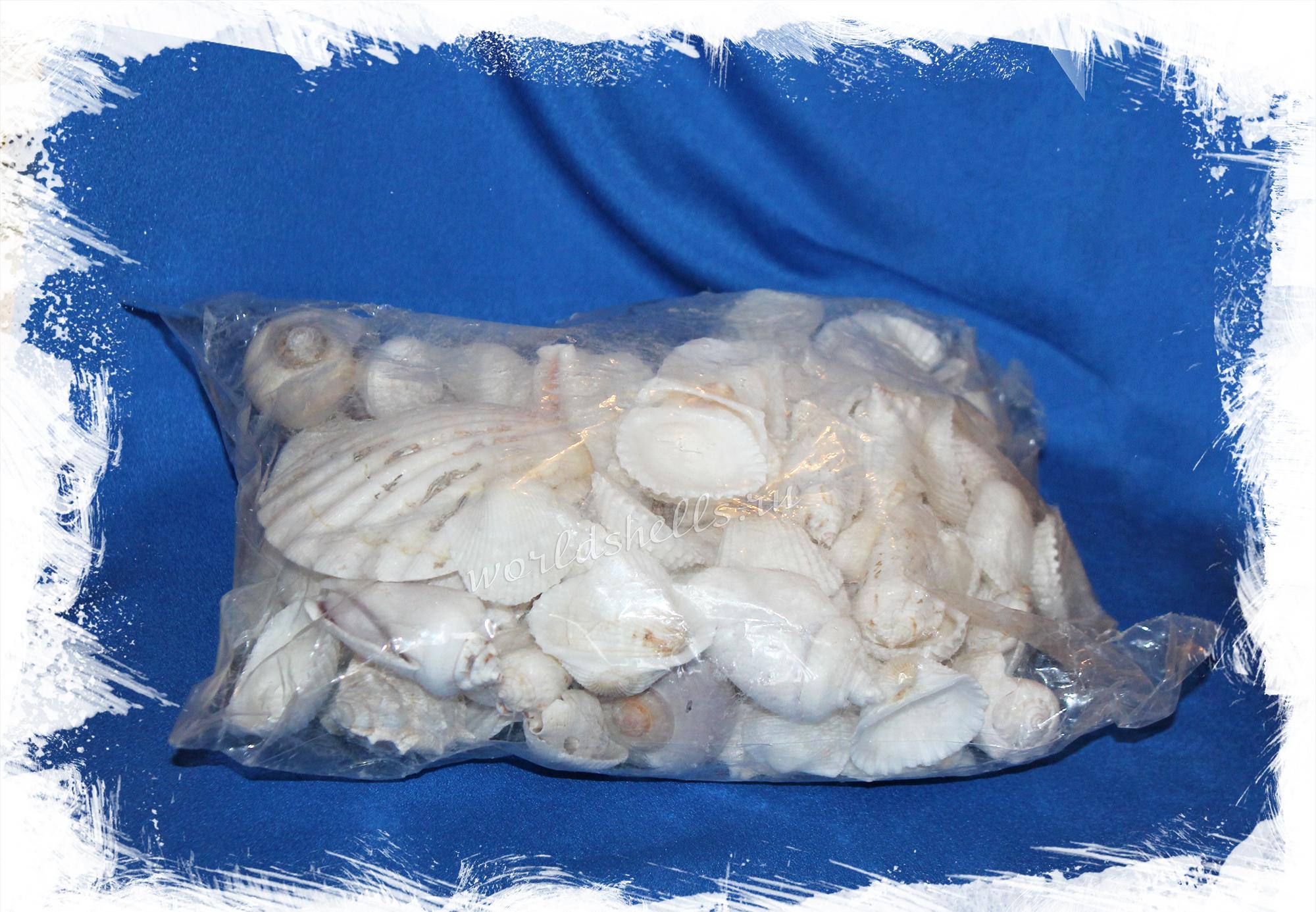 Набор светлых морских ракушек для декора