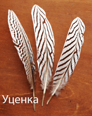 Перо серебряного фазана