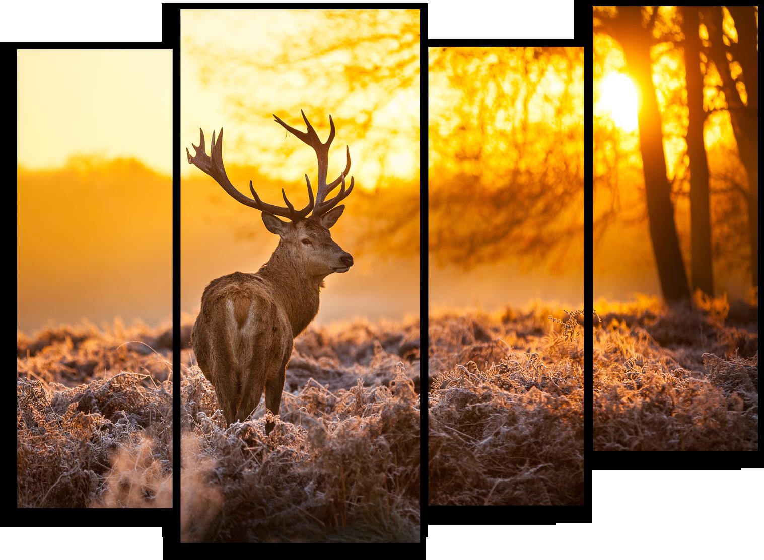 """Животные Модульная картина """"Одинокий олень"""" М375.png"""
