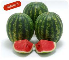 Арбуз Криспид F1 семена арбуза, (Sakata / Саката) Криспид_F1_семена_овощей_оптом.jpg