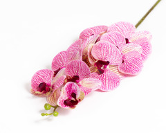 Ветка пёстрой орхидеи.