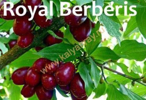 Купить табак Argelini Royal Berberis в Симферополе