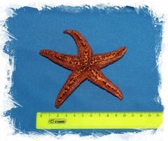 Амурская звезда 10-12 см.