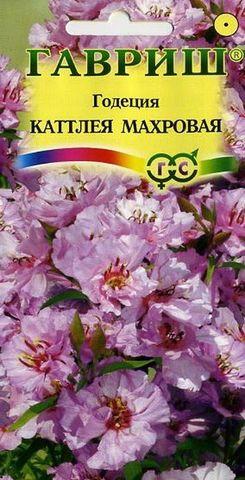 Семена Годеция Каттлея махровая, Одн