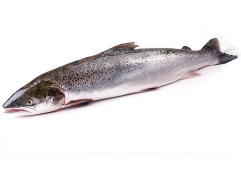 Норвежского лосося не пустили в Россию