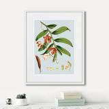 Уолтер Гуд Фитч - Himalaya Plants White And Orangered Flowers, 1869г.