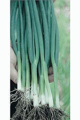 Тотем семена лука на перо, (Sakata / Саката)