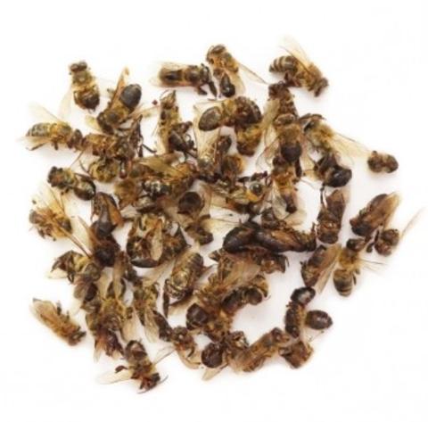 Подмор пчелиный, 25 гр