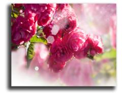 """Постер """"Розовый пион"""""""