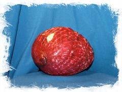 Галиотис Красный
