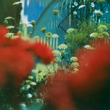 Pulled Apart By Horses / The Haze (LP)