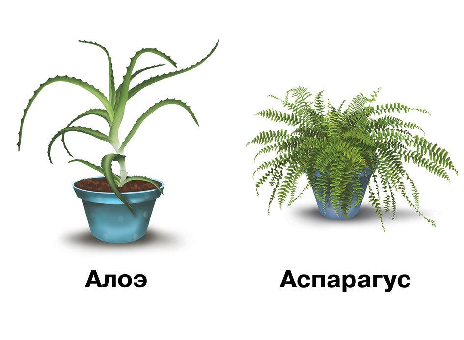Комнатные растения картинки с надписями, картинку про
