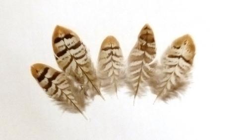 Перо фазана, 5-10 см. упаковка 5 шт