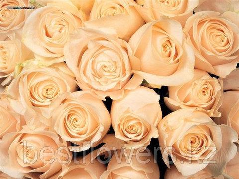 Кремовые розы (Голландия, вы сами выбираете количество)
