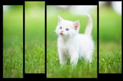 "Модульная картина ""Белый котенок"""