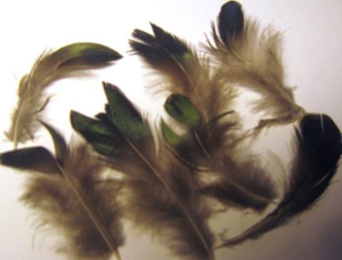 Перья алмазного фазана, изумруд,5-8 см., 8 шт. Уценка