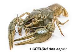 Живые раки отборные~1кг