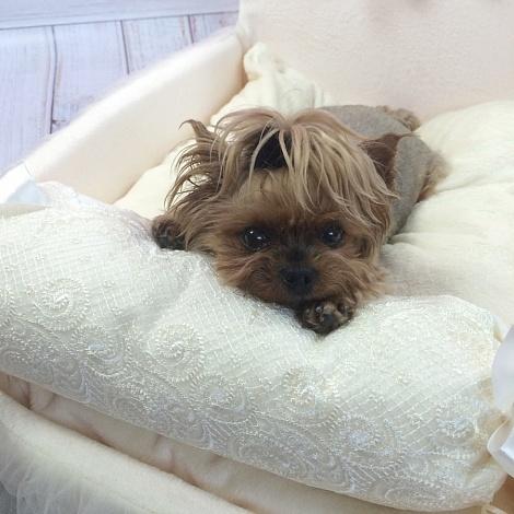кровать для йорка