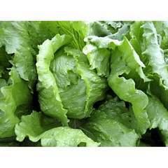 Антарктика семена салата айсб., (Vilmorin / Вильморин)