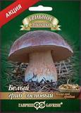 Белый гриб Сосновый на субстрате