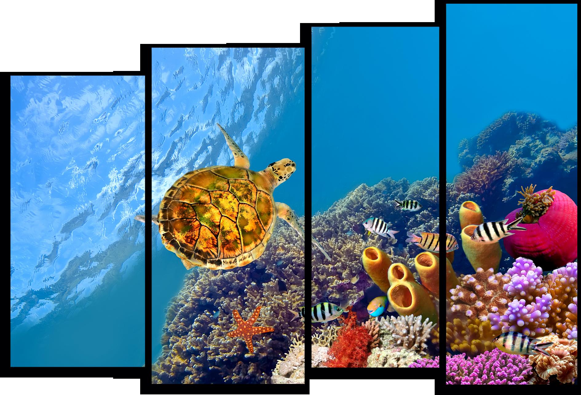 """Животные Модульная картина """"Красное море"""" М797.png"""