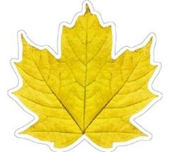 Элемент Кленовый лист 3 (150*150) 10 эл.