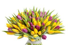 101 тюльпан желтый и сиреневый