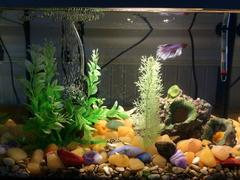 Набор самоцветов для аквариума 1кг (около 60 штук)