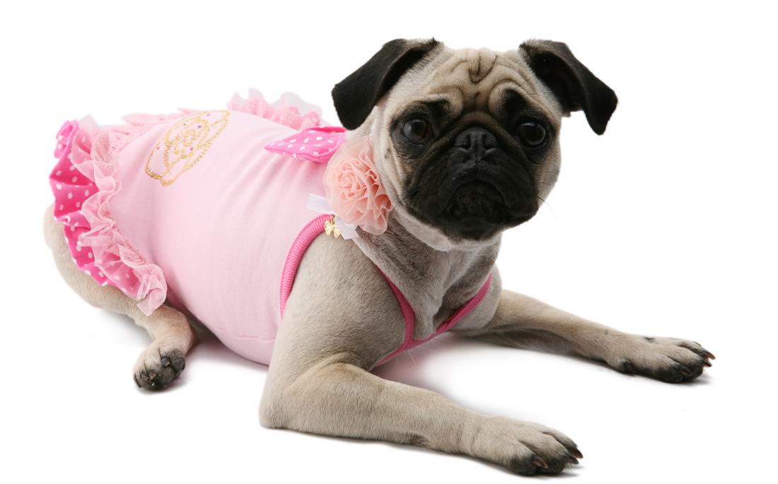 105 PA - Платье для собак