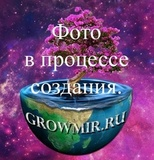 Гроутент HomeLab HL60 (комплект ESL) СТАНДАРТ