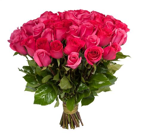 Голландские розовые розы
