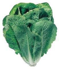 Лираз семена салата айсберг, (Hazera / Хазера)