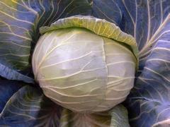 Грандслам F1 семена капусты белокочанной, (Sakata / Саката)