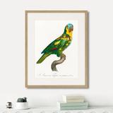 Джон Гульд - Beautiful parrots №11, 1872г.