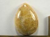 Кабошон коралла окаменелого, капля, 35x25x9 мм (3)