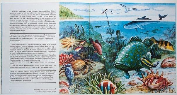 Разворот книги и иллюстрация