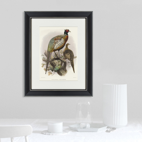 Джон Джеймс Одюбон - Китайский кольчатый фазан, литография, 1835г