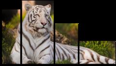 """Модульная картина """"Амурский тигр"""""""