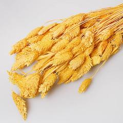 Сухоцветы. Фаларис 70 гр. желтый 100318