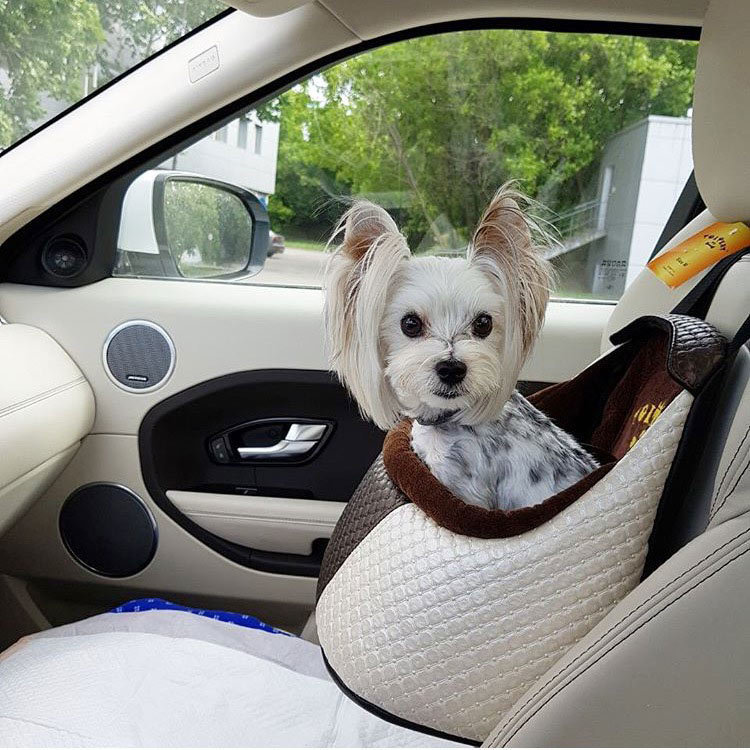 3002/9 - Автокресло для собак
