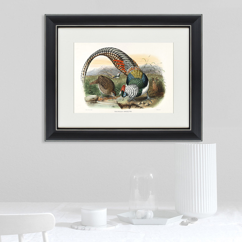 Джон Джеймс Одюбон - Алмазный фазан, литография, 1843г
