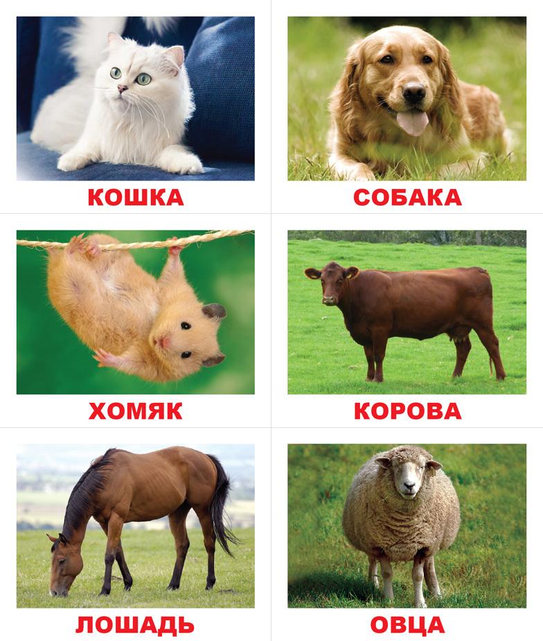 диета изучаем животных фото решении